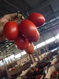 Greenhouses Ukraine