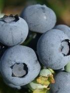 Себастьян Blueberry