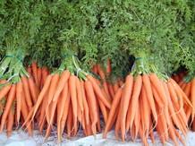 Морковь сортов «Шантане», «Каротель», «Фэнси»  ИП Глобалов